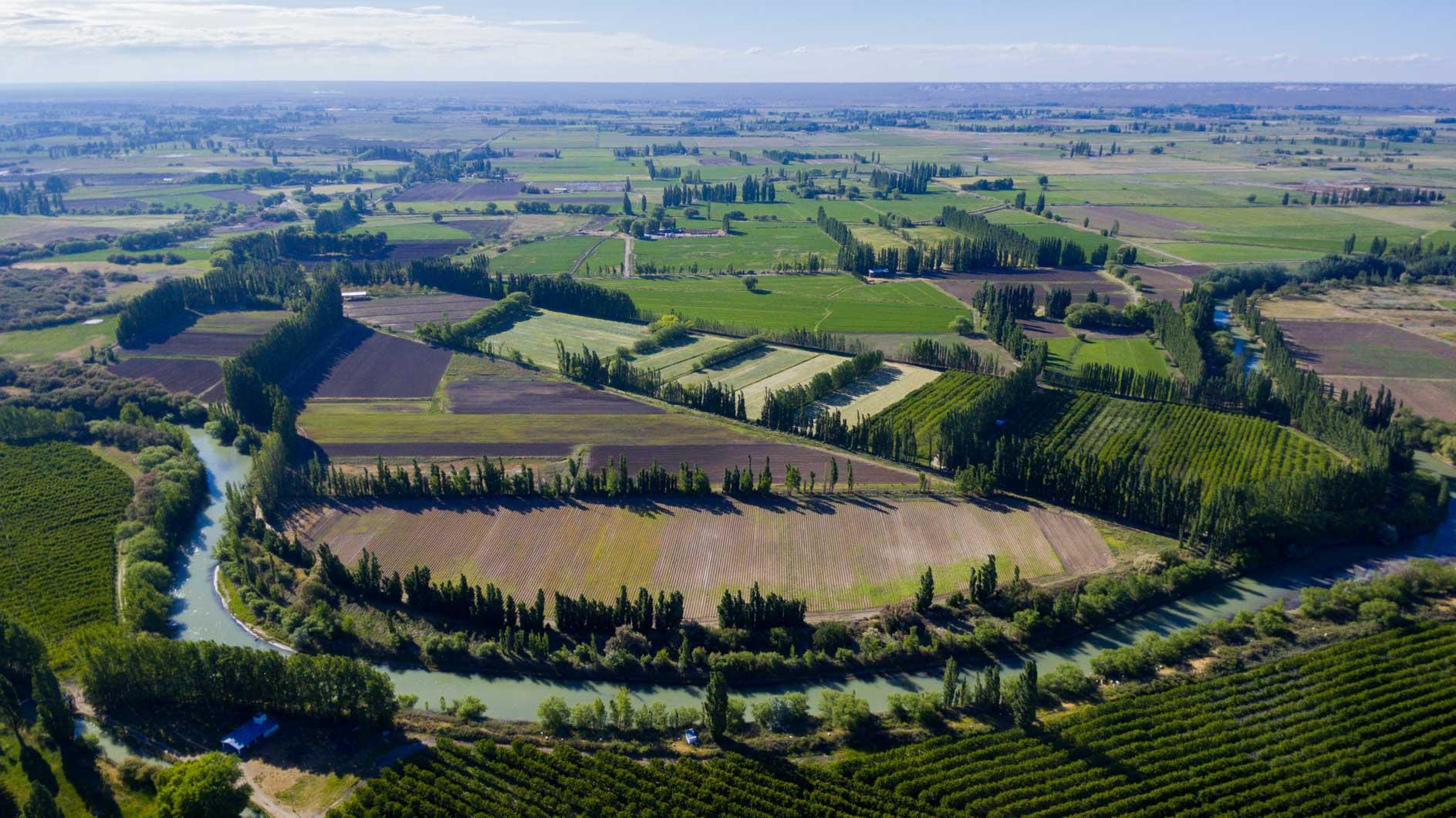 El 80% de la verdura que se consume de origen provincial es producida en el Valle Inferior del Río del Chubut
